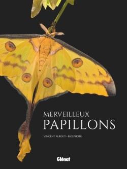 Merveilleux papillons